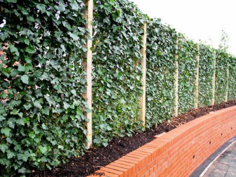 houghton Street Ivy Wall 62
