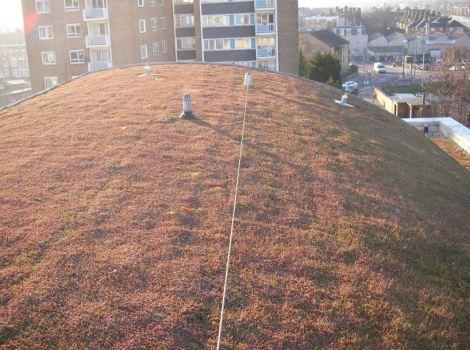 Lifeline installed on green roof